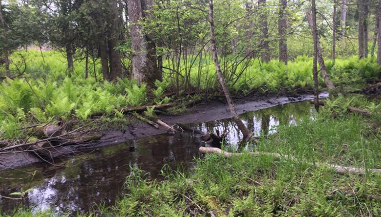 A portion of the creek running through the newly protected property. Photo by Drew Reinke, Door County Land Trust, Land Protection Specialist