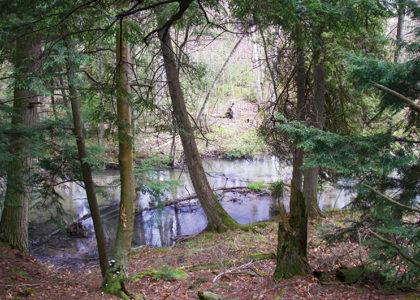 Heins Creek by JSchartner