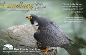 landings-news-splash-winter-2018