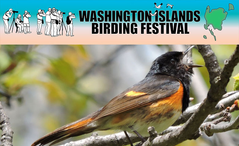 Washington-Island-Bird-Festival