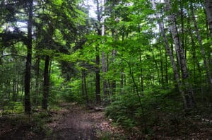 Chambers-Island-Forest-June-2015-by-J-Schartner