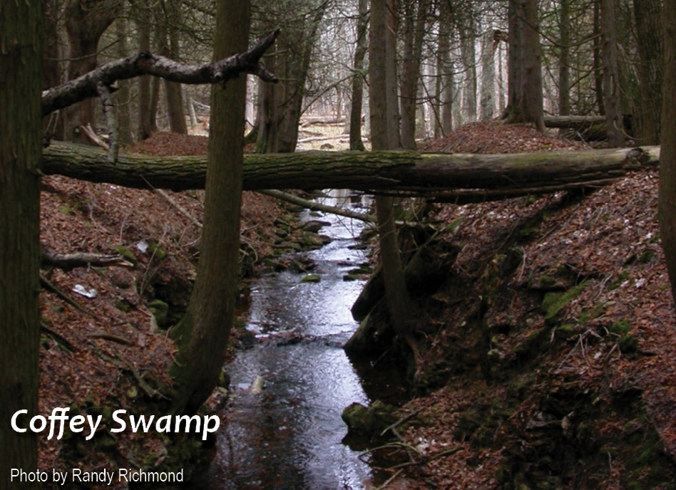 WI-coffey-swamp