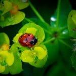lady_bug_solitude_david-heilman.jpg
