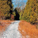 11_12am 01.07.2021 TSNP trail back _03346  2.jpg