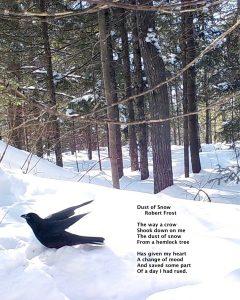 Crow (1).jpeg