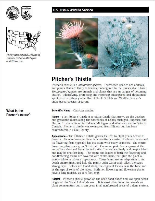 USFWS Pitcher's Thistle Fact Sheet