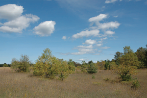 Domer-Neff Nature Preserve