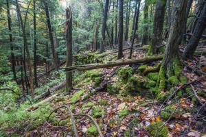 Lautenbach Woods<br> Nature Preserve